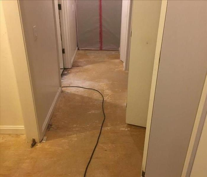 Professional Mold Mitigation in branford, CT