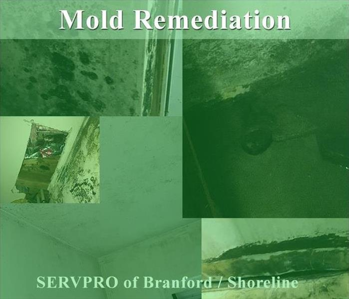 Mold Remediation Mold Remediation in Branford CT