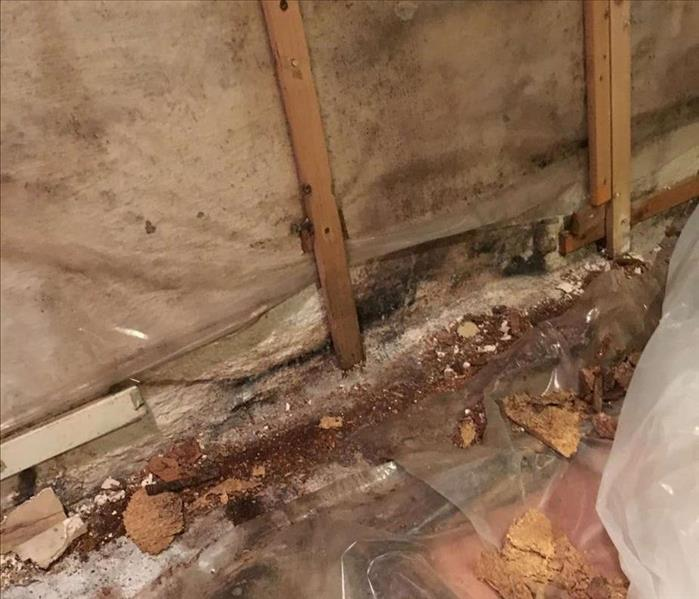 Mold Remediation Stop Mold Growth in Basements