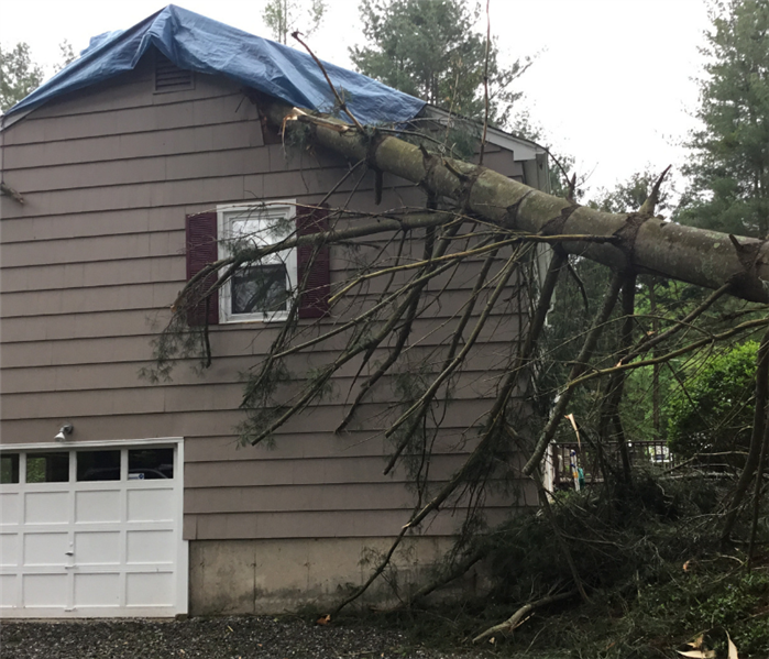 Photo of a tree through the roof of a Branford home after a hurricane.